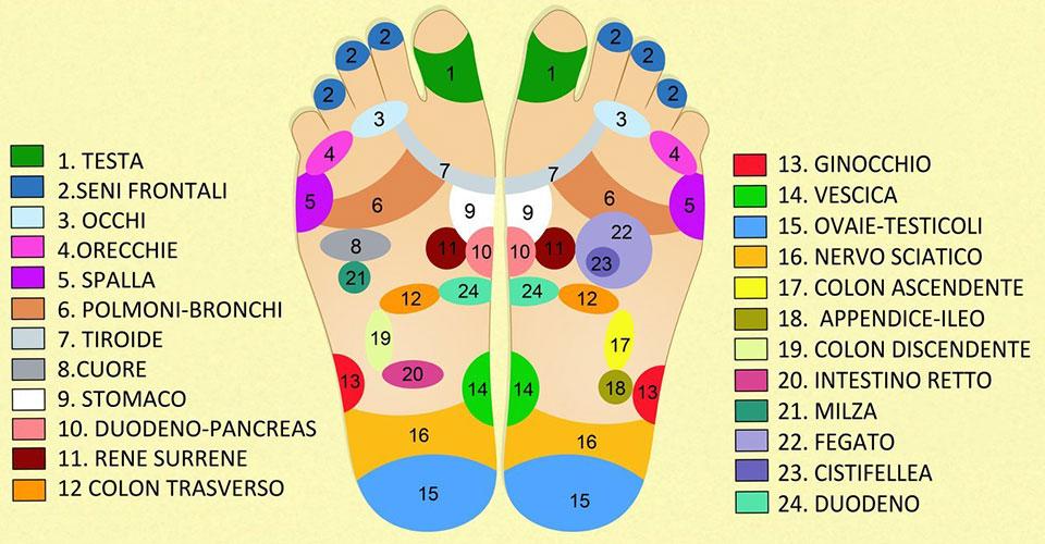 mappa del piede per benessere del corpo - riflessologia plantare